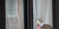Cats Prefer Human Interaction Than Food