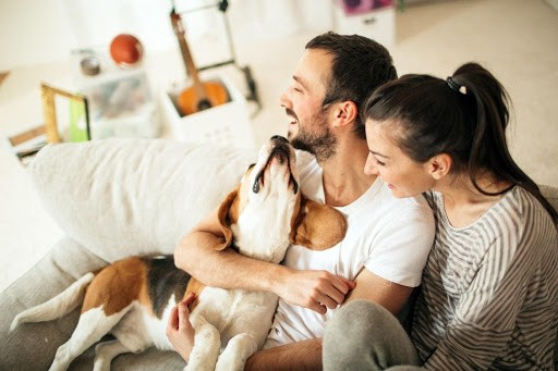 6 Most Popular Apartment Dog Breeds