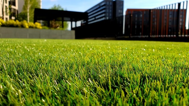 Lawn Care Tips: Why Your Lawn is a Reflection of You and How to Care for It