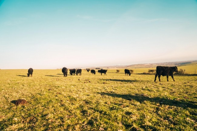 OSI Group and Nicole Johnson-Hoffman Lead Industry Drive for Beef Sustainability